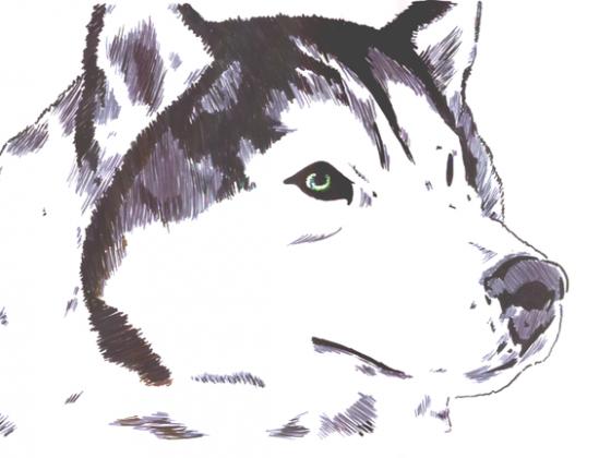 Wolfs Rain 02