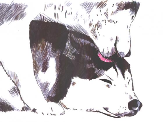 Wolfs Rain 01